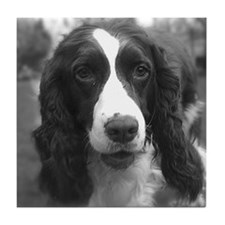 English Springer Spaniel Tile Coaster
