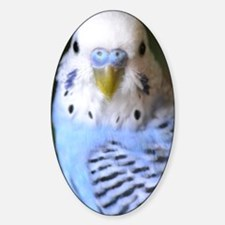 Budgies 013 Decal
