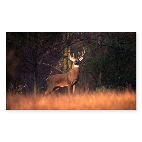 Whitetail Deer Rectangle Sticker