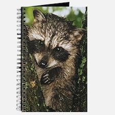 RacA2.20 4.56 Journal