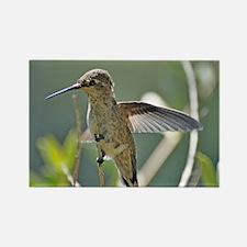 Female Annas Hummingbird Rectangle Magnet