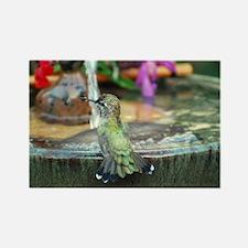 Baby Annas Hummingbird Rectangle Magnet