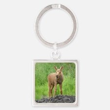 P6300040 Moose Calf 01 Square Keychain