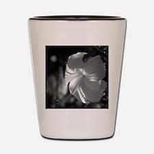 P4140011 Shot Glass