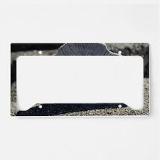 IMG_0951 License Plate Holder