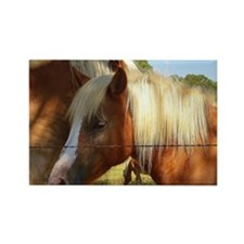 Haflinger Secret Rectangle Magnet