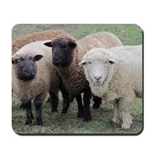 3 Sheep at Wachusett Mousepad