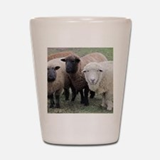 3 Sheep at Wachusett Shot Glass