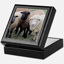 3 Sheep at Wachusett Keepsake Box