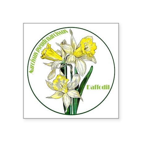 "Daffodil-C10trans Square Sticker 3"" x 3"""