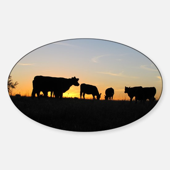 Cows at sundown Sticker (Oval)
