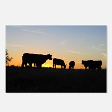 Cows at sundown Postcards (Package of 8)
