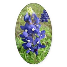 Bluebonnets Decal