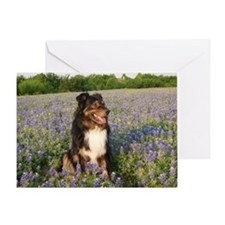 Zorro Bluebonnets-BIG Greeting Card