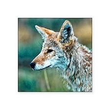 """coyote Square Sticker 3"""" x 3"""""""