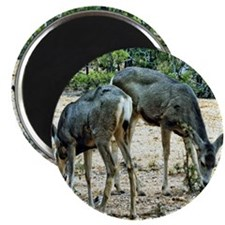 white tail deer Magnet