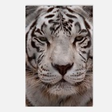 (2) White Tiger 4 Postcards (Package of 8)