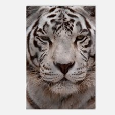(3) White Tiger 4 Postcards (Package of 8)