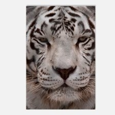 (4) White Tiger 4 Postcards (Package of 8)