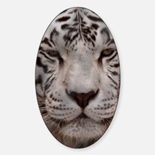 (4) White Tiger 4 Decal