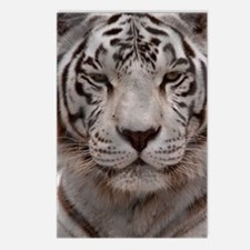 (6) White Tiger 4 Postcards (Package of 8)