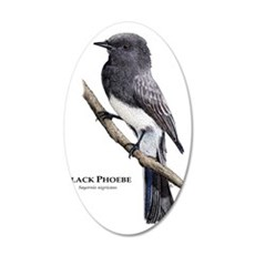 Black Phoebe 35x21 Oval Wall Decal