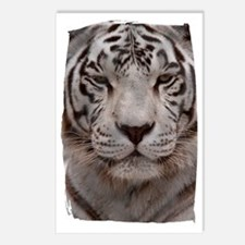 (16) White Tiger 4 Postcards (Package of 8)