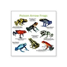 """Poison Dart Frogs of the Am Square Sticker 3"""" x 3"""""""