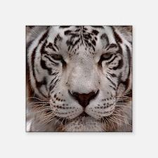 """(15) White Tiger 4 Square Sticker 3"""" x 3"""""""
