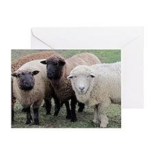 3 Sheep at Wachusett Greeting Card