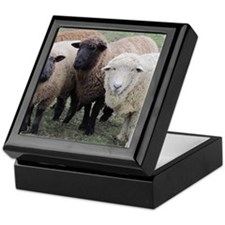 3 Sheep at Wachusett Keepsake Box