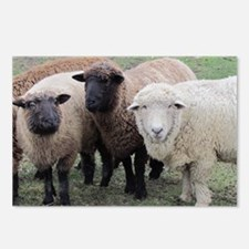 3 Sheep at Wachusett Postcards (Package of 8)