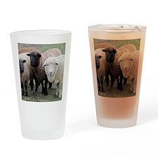 3 Sheep at Wachusett Drinking Glass