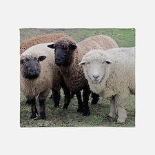 3 Sheep at Wachusett Throw Blanket