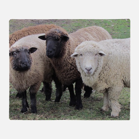 3 Sheep at Wachusett Throw Blanket