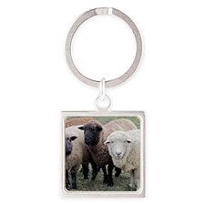 3 Sheep at Wachusett Square Keychain