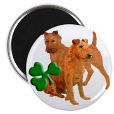 irish terriers with shamrock Magnet