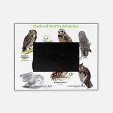 Owls of North America Picture Frame