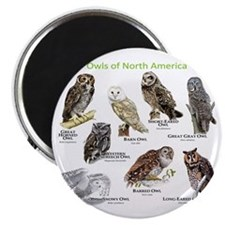 Owls of North America Magnet