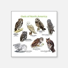 "Owls of North America Square Sticker 3"" x 3"""