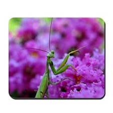 Keepsake Box Preying Mantis Mousepad