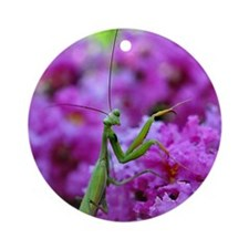 Keepsake Box Preying Mantis Round Ornament