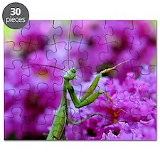 Keepsake Box Preying Mantis Puzzle