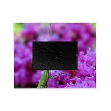 Keepsake Box Preying Mantis Picture Frame