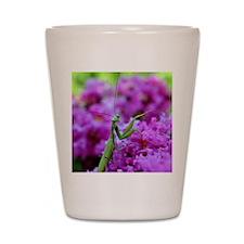 Keepsake Box Preying Mantis Shot Glass