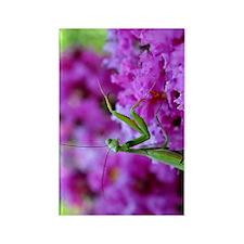 Greeting Card Pink Preying Mantis Rectangle Magnet