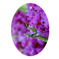 Greeting Card Pink Preying Mantis Oval Ornament