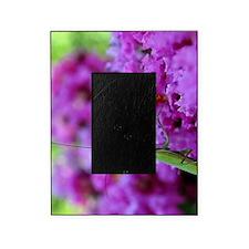 Greeting Card Pink Preying Mantis Picture Frame