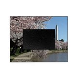 Cherry blossom Picture Frames