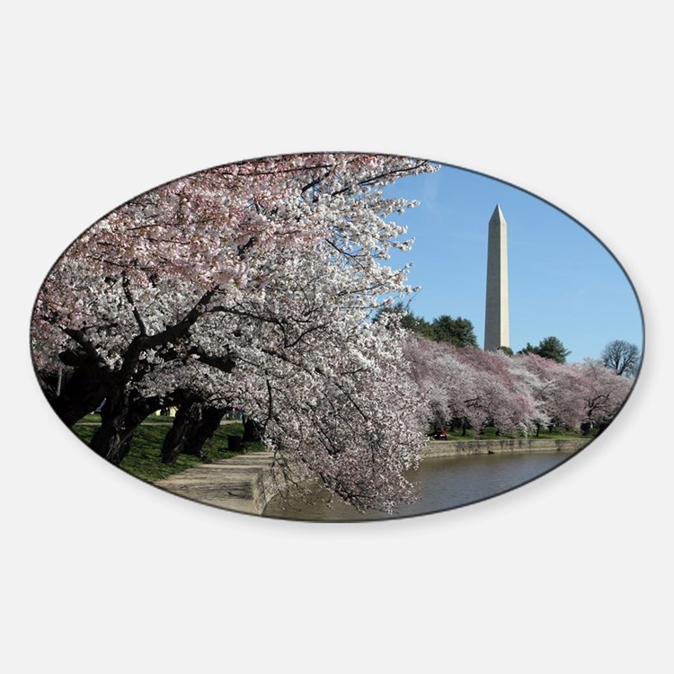 Peal bloom cherry blossom frames Wa Decal